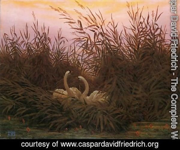 Caspar David Friedrich - Swans in the reed with first morning-red